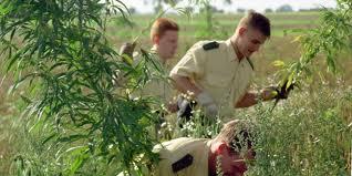 niederlande weed kaufen