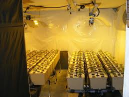 indoor grow anleitung america 39 s best lifechangers. Black Bedroom Furniture Sets. Home Design Ideas