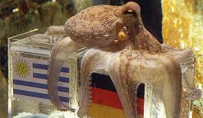 Bildergebnis für haustier kraken