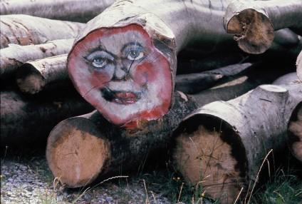 steht mammutbaum unter naturschutz