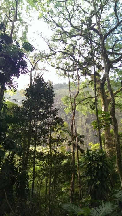regenwald1