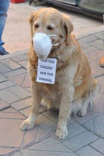 Istanbul Hund Gasmaske 1