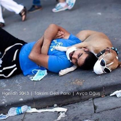 Istanbul Hund Gasmaske 2