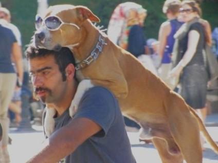 istanbul-hund