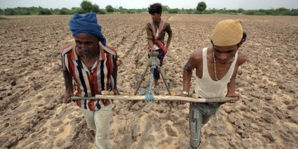 Farmers plough a field before sowing cotton seeds in Kayla village