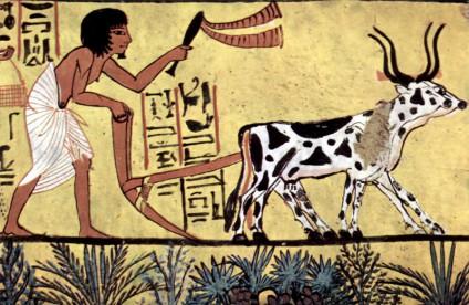bauer-aegypten