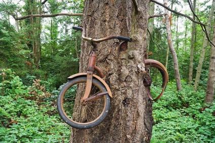 baum-mit-fahrrad-viralnova