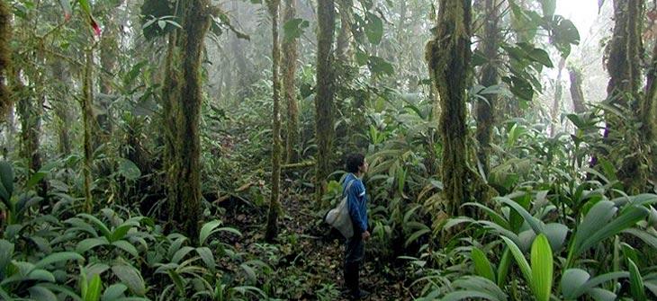 Teakbaum im tropischen regenwald  Hier spricht der Aushilfshausmeister! » Heilige Haine/Bäume fällen