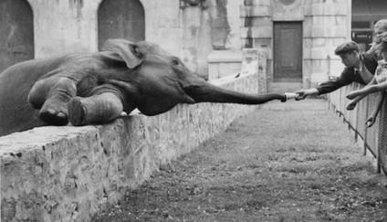 elefant-fuettern