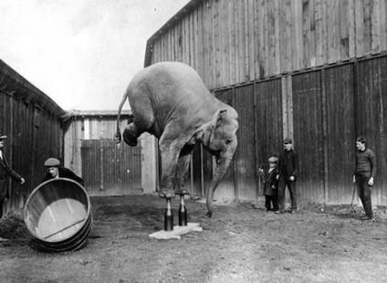 elefanten-kunststueck