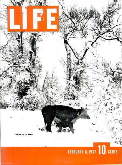 life-animal