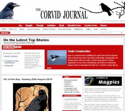 the-corvid