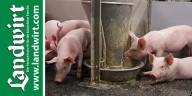 landwirt-schweine