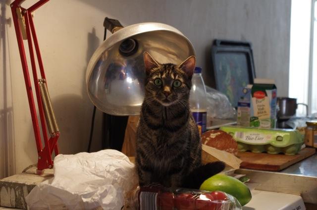 Fantastisch Fünf Draht Katze Zeitgenössisch - Die Besten ...