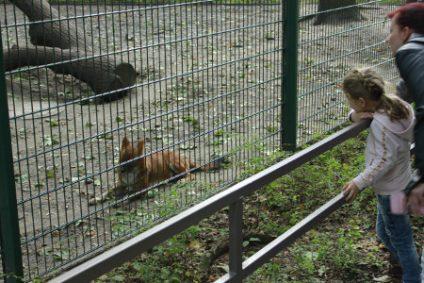 asiatischer-rothund2