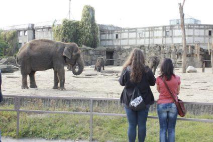 elefantengehege-asiatischebb