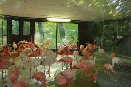 flamingos-im-hausb