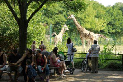 giraffen2b