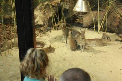kleiner-pampashase-kleiner-marab