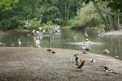rostgaense-pelikane-fischfreiherbb