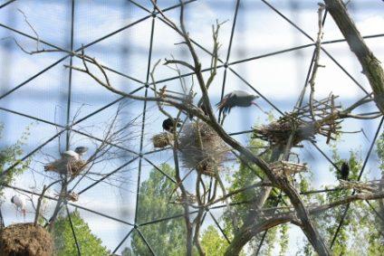 storch-ibis-nimmersattb