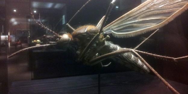 Riesenfliege