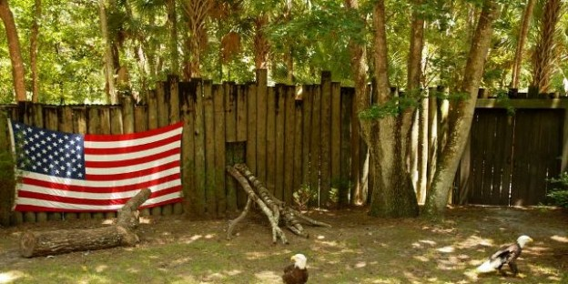 Florida Diaries 2 - Anti-Amerikanismus