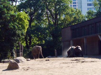 Elefanten, Berliner Zoo, tazblog Schröder & Kalender, Foto: Barbara Kalender
