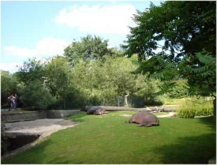 Flusspferd, Berliner Zoo, tazblog Schröder & Kalender, Foto: Barbara Kalender