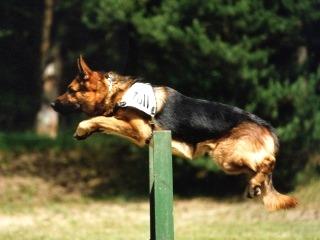 zollhund-2.jpg