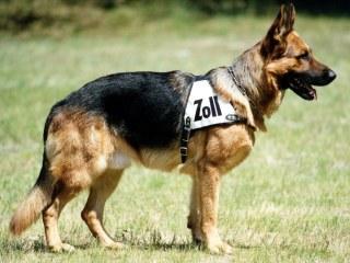 zollhund.jpg